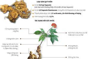 Ngọc Linh - Loài sâm quý hiếm chỉ có ở Việt Nam