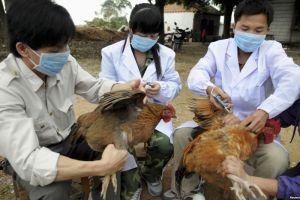 Hỗ trợ 6 địa phương phòng ngừa dịch bệnh động vật sau cơn bão số 3