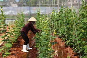 Nâng cao hiệu quả, khả năng cạnh tranh và phát triển bền vững ngành nông nghiệp