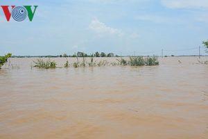 Chùm ảnh: An Giang nỗ lực ứng phó lũ bảo vệ sản xuất nông nghiệp