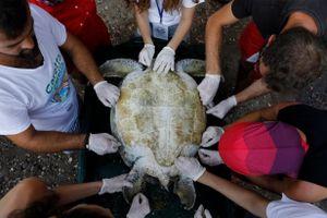 Giải cứu rùa biển Thổ Nhĩ Kỳ khỏi tàu và những khu resort
