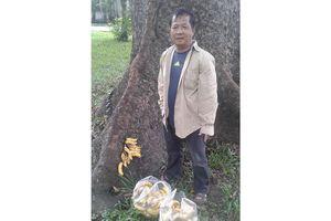 Người tự nguyện cho sóc ăn ở Tao Đàn