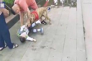 Kinh hãi khoảnh khắc cậu bé 4 tuổi bị chó tấn công trên đường