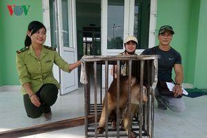 Thừa Thiên-Huế tiếp nhận một cá thể khỉ đuôi lợn quý hiếm