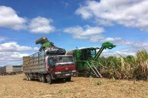 Gia Lai xây dựng cánh đồng lớn chuyên canh cây trồng