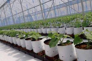 TP.HCM: Cơ hội vàng phát triển nông nghiệp công nghệ cao
