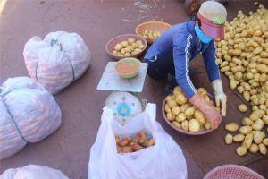 Gần 600 tấn khoai tây Trung Quốc nhập vào Đà Lạt sau 3 tháng