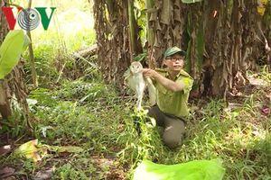 Cặp trăn gấm quý hiếm được thả về Khu bảo tồn thiên nhiên