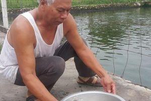 Nam Định: Thương binh cụt 1 chân sống khỏe nhờ cá rô 'khổng lồ'