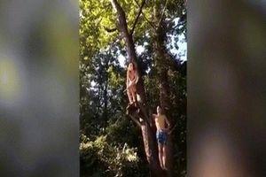 Video cô gái mặc bikini đang đu dây xuống sông thì ngã 'dập mặt'