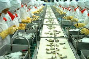 Doanh nghiệp 24h: Doanh nghiệp nào đã nhảy vọt trong bảng xếp hạng xuất khẩu thủy sản?