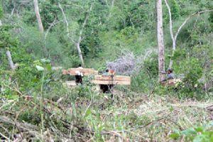 Khánh Hòa: Giao khoán trái quy định, làm nhà trái phép trong rừng phòng hộ