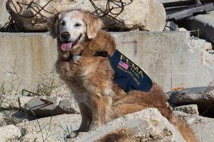 17 năm sau vụ khủng bố 11/9, thế giới vẫn không quên những chú chó cứu hộ anh hùng