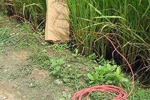 Con trai chết lặng khi thấy mẹ bị điện giật tử vong ngay tại ruộng lúa trước nhà