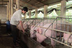 Hạn mức vay tối đa không có tài sản đảm bảo của chủ trang trại