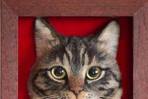 Tranh mèo 3D siêu thực làm từ lông cừu