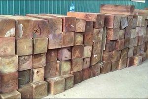 Giấu gỗ quý trong giấy phế liệu nhập khẩu