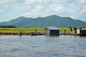 Hàng ngàn hécta lúa ở huyện Tri Tôn bị lũ đe dọa