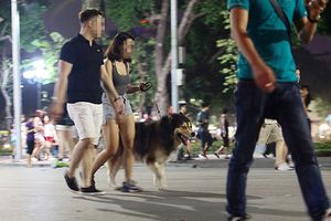Hà Nội: Dự kiến cấm mang chó, mèo vào phố đi bộ