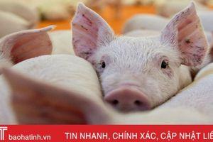 Ngăn chặn nguy cơ dịch tả lợn Châu Phi xâm nhiễm vào Hà Tĩnh