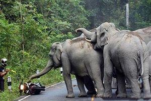 Lỡ làm chuyện này, người đàn ông phải chắp tay xin voi tha thứ