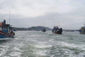 Miền Trung: Ngư dân khí thế trở lại ngư trường Hoàng Sa, Trường Sa