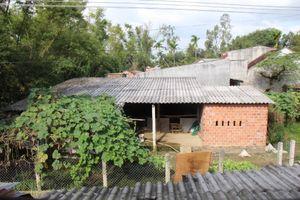 Bình Định: Trại chăn nuôi 'tra tấn' khu dân cư, Chủ tịch xã bảo chưa nghe, chưa thấy!