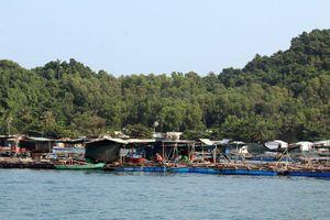 Phát triển nghề nuôi cá lồng bè trên biển