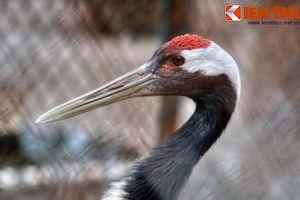 Khám phá loài chim cực hiếm của Nhật Bản ở Hà Nội
