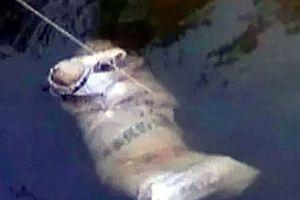 Phát hiện thi thể người đàn ông bị trói bằng dây thừng trôi trên sông Thương
