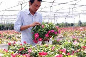 Kỳ tích ở Lâm Đồng: Đất nông nghiệp hóa vàng, giá trị đạt 2 tỷ/ha
