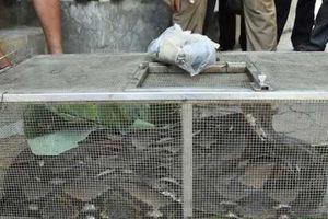 Hà Tĩnh: Những lời đồn dựng tóc gáy về con trăn khổng lồ trong chuồng bò