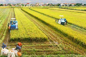 Một số kết quả bước đầu trong thực hiện tái cơ cấu ngành nông nghiệp ở tỉnh Vĩnh Phúc