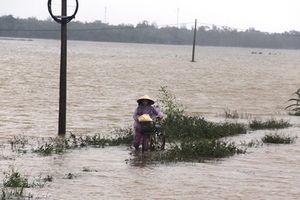 Nông nghiệp Việt chịu ảnh hưởng nặng nề từ thiên tai
