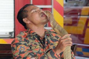Ăn, ngủ, hôn 'nồng say' rắn hổ mang, vua rắn nhận kết thảm