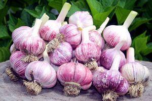 Những cách ăn tỏi dễ gây ngộ độc cần tránh ngay