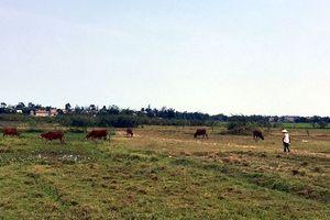 Thuê đất trồng lúa nông dân hoàn toàn có thể làm giàu
