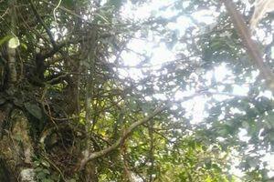 Đóng hồ sơ vụ án sát hại dã man 2 bố con trong rừng vì nghi phạm đã chết