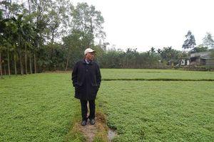 Thu tiền tỷ mỗi năm từ cây rau răm và trang trại tổng hợp