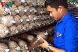 Làm giàu từ nghề trồng nấm
