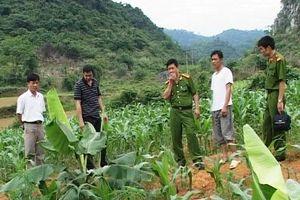 Hà Nội: Đối tượng chém chết người ở ruộng ngô ra đầu thú