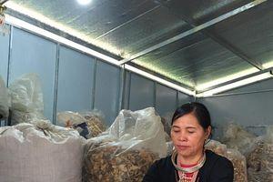 Lương y Triệu Thị Hòa với bài thuốc chữa khỏi các bệnh xương khớp