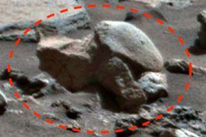 Bí ẩn vật thể như hóa thạch rùa cổ trên sao Hỏa