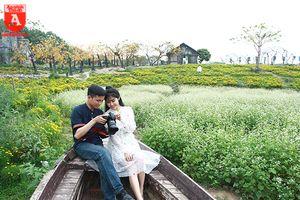 Ngỡ ngàng với cánh đồng hoa tam giác mạch nở trái mùa ở Hà Nội