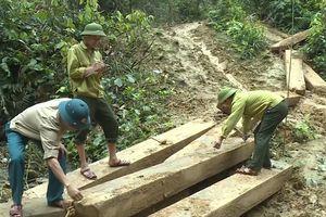 Khởi tố vụ án phá rừng phòng hộ Tuyên Hóa