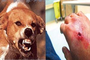 Triệu chứng bệnh dại ở người và cách sơ cứu khi bị chó cắn