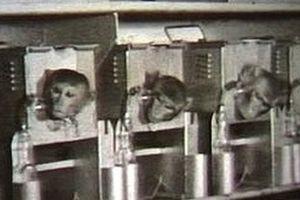 Bí mật động trời vụ Skripal hé lộ: Mỹ và Porton Down
