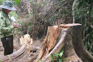 Phó chủ tịch Quảng Nam: Thấy rừng bị phá cảm giác như máu mình đổ xuống