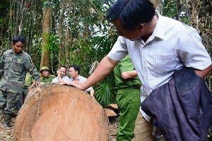 Phó chủ tịch Quảng Nam: Tôi có cảm giác như máu mình đổ xuống