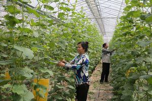 Gỡ vướng trong xúc tiến thương mại nông nghiệp